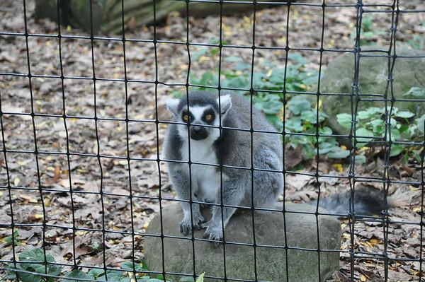 Binder Park Zoo 8-24-14