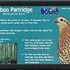 Bamboo partridge-001