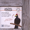 Lady Ross's turaco-001