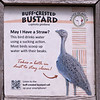 buff crested bustard-001