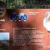 White stork-001