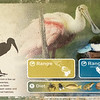 Wood stork-001
