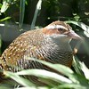 Banded rail-204