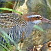 Banded rail-005