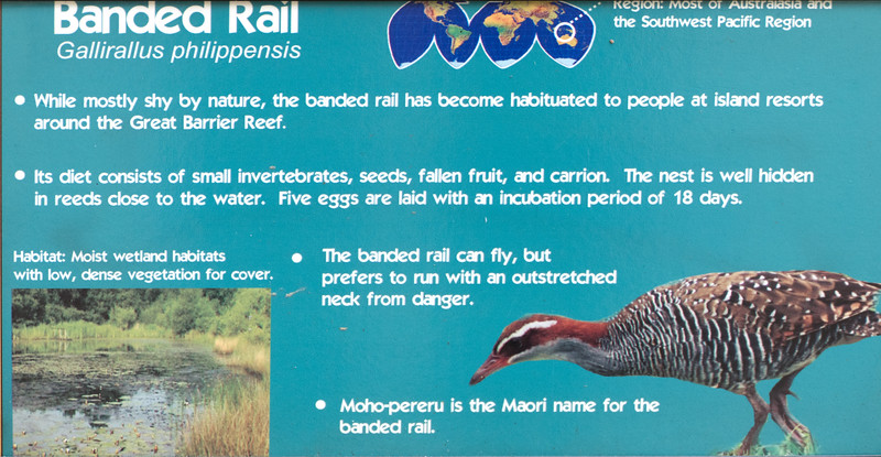 Banded rail-001