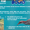 Banded rail-001