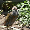 Banded rail-003