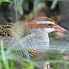 Banded rail-006