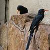 Green wood-hoopoe-005