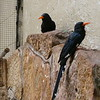 Green wood-hoopoe-006
