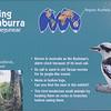 Laughing Kookaburra-001