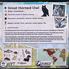 Great horned owl-001