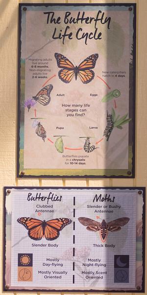 Butterflies-104