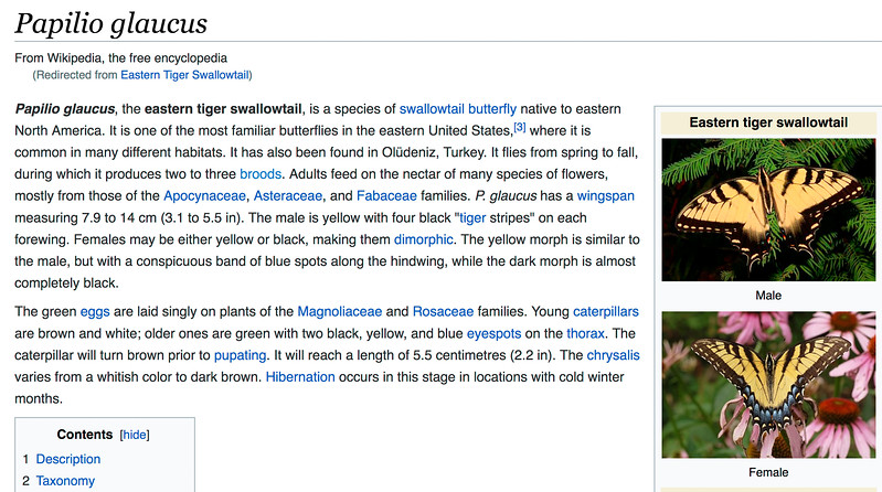 Eastern_Tiger_Swallowtail-001
