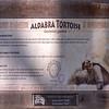 Aldabra_Tortoise-002