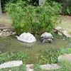 Aldabra_Tortoise-010