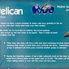 American white pelican-001