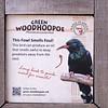 Green wood-hoopoe-002