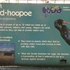 Green wood-hoopoe-001