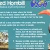Red billed hornbill-001