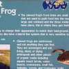 Marsabit_Clawed_Frog-002