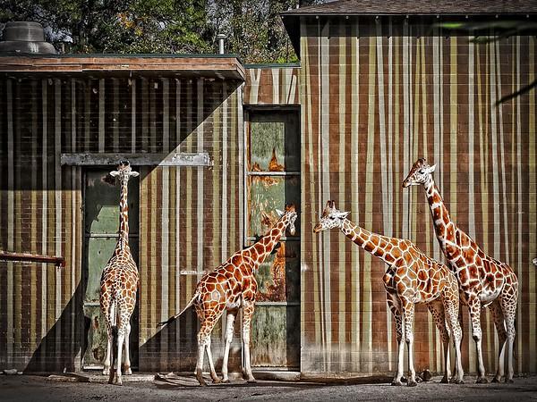 Birmingham Zoo, Alabama