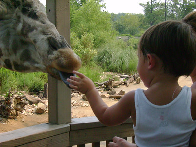 Tate feeding the giraffe