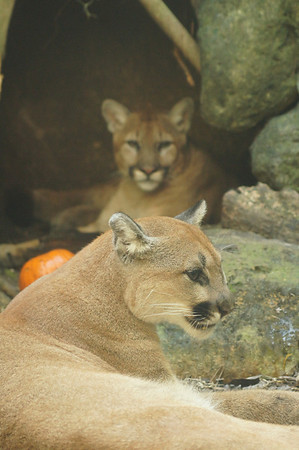 boo at the zoo 10/27/12