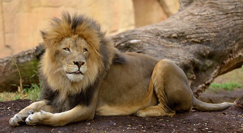 Brookfield Zoo 2013
