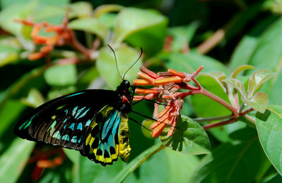 Butterflies at the Zoo July 2008