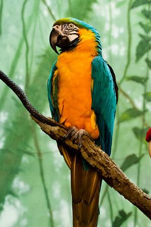 CP Zoo Feb 2011