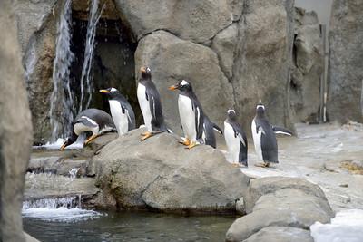 Calgary Zoo February 2013