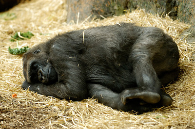 Calgary Zoo August 2006