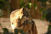 Chaffee Zoo, Fresno CA