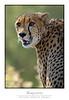 Cheetah_7330Cfw