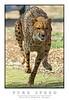 Cheetah_7267Fw