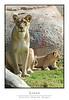 Lions_7159Cfw