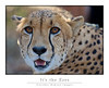 Cheetah_Eyes_7322Cfw