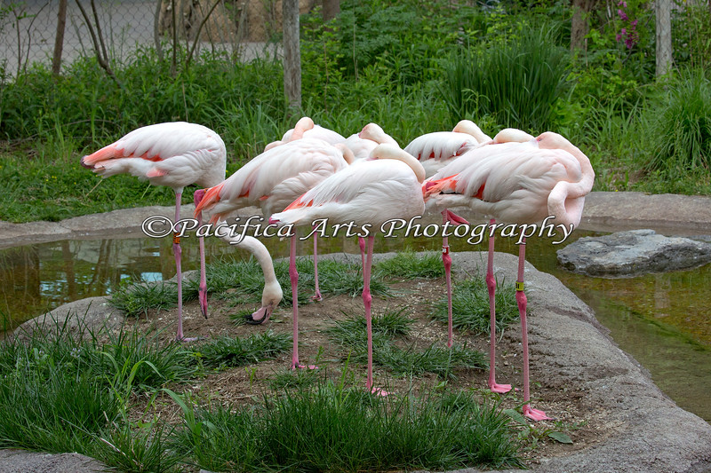 Greater Flamingo - one is not like the rest.  ;)