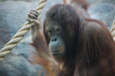 Cleveland Metroparks Zoo  II