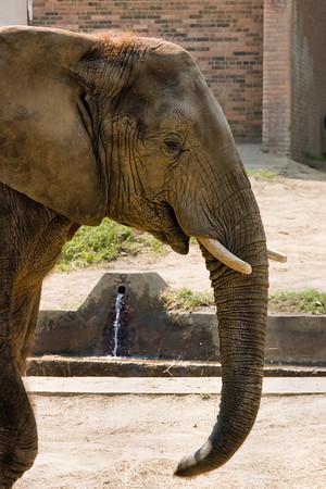 Cleveland Zoo 2007