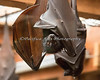 Large Flying Fox Bat