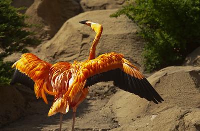 Flamingo Bugaloo_0987