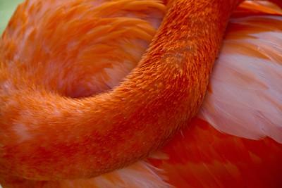 Flamingo_1128