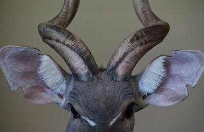 Kudu Love_1065