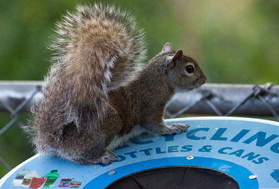 Squirrelly_1053