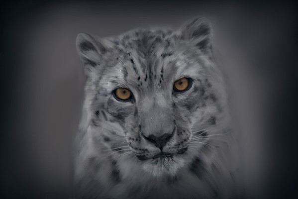 Como Zoo