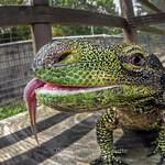 Christopher Gillette (CrocodileChris)'s photo
