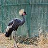 Denver Zoo 017
