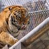 Denver Zoo 011